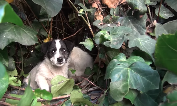 Puppies abaonded by their mom, but when they try to rescue them—it's easier said than done