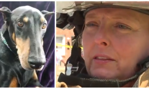After beloved dog dies, firefighter had no time to grieve. The rescue she's called to—she hears bark