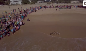 Penguins were washed up on shore, months later they're being released—look at the crowd