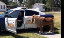 Miniature Pony Gets Police Escort Home After Running Down Highway