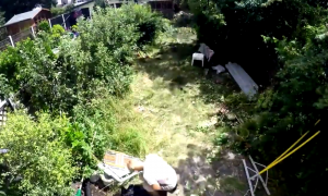 At first it just looks like a bunch of overgrown grass—but wait till you see the end of the video