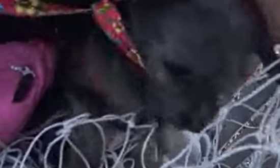 Dog, 3 Pups Rescued After Giving Birth Near Power Lines