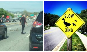 Man completely holds up rush hour traffic. But when you see the reason why—you wouldn't be mad