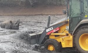 Rhinoceros was stuck in a lot of mud. When man attempts to rescue it with a digger—it's not easy