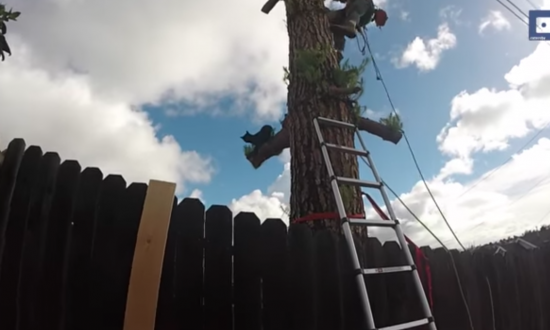 Team arrive to rescue cat stuck high up—halfway through the rescue—it starts to become obvious