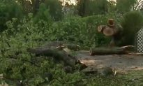 One Killed by Tree in Orange County During Tuesday Storm