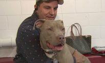 Dog Left for Dead Could Help Veterans Beat Depression