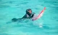 Monkey Escapes Heat by Going for Dip in Public Swimming Pool