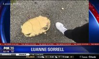 Woman Rescues Turtle That Was Run Over