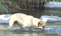 Dogs Can Not Only Fetch, They Can Also Fish