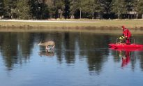 Oregon Firefighters Rescue Deer Trapped on Icy Pond