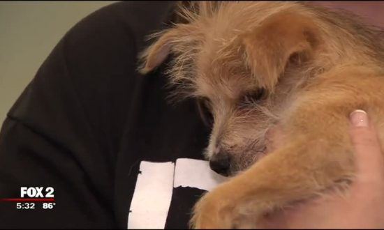 Rescue Dog Heads to New Life in Style