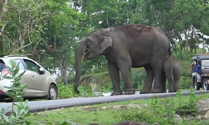Tourists try to take pic of elephant. But when it catches them—they get more than they bargained for