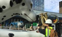 Giant Dalmatian with Real Taxi on its Nose Comes to Midtown