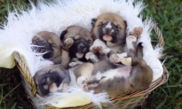 New Pups on Display at Australian Reptile Park