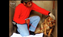 Stray German Shepherd didn't know how to interact, but what this man does—just watch him