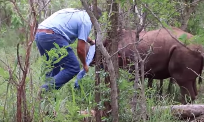 Baby rhino's mother was killed by poachers, but when rescuers try to help him—it's hard to watch