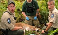 Cougar Kills Biker in Washington State, Then Scientist Reveals Likely Reason Why