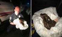 Officer responds to call of injured deer, but before animal control arrives—he does the unthinkable