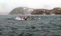 Raft of Sea Lions Swims Near Alaska Researchers