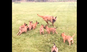 These puppies have just spotted their mom, but check out the moment they catch her