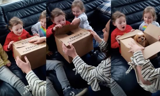 Young sisters been asking for a puppy for years, when they finally get one—watch the middle one