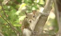 Aggressive Park Squirrels Attacking Kids in Florida