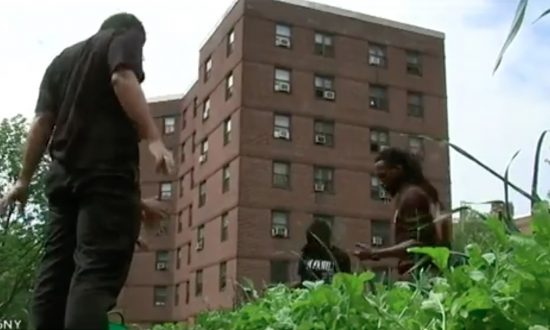 NYCHA Urban Farms Bearing Fruit