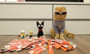 Some people love cats and some people hate cats, but after watching this video—you will agree