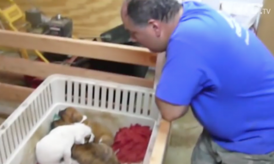 These puppies are so full of energy—but when this man sings a lullaby—it starts to work