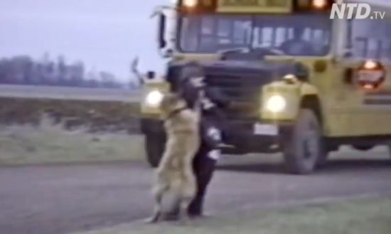 Dogs waiting for the kids to get off the school bus, what they do next—I can't stop watching