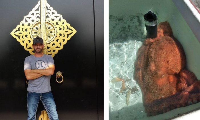 Fish market owner purchases 70-pound octopus and he's not planning on selling it