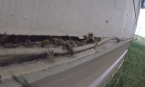 Bees Nearly Killed Man, But Emergency Crews Saved Him