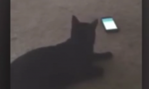 When this phone alarm goes off—just watch the cat
