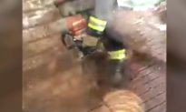 Firefighters Free Scared Puppy Using a Chainsaw