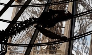 Mystery Dinosaur is Puzzling Scientists—Here's How Much It Was Sold