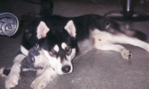 His dog was the best companion, but when he passed away—look at what owner does with ashes