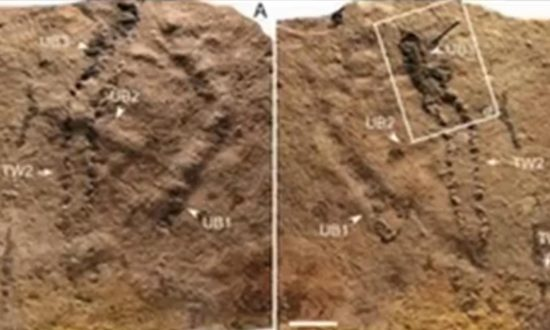 Scientists Have Discovered World's Oldest Animal Footprints