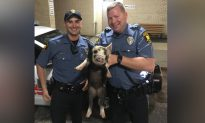Neptune Police Return Runaway Pig to Owner, Acknowledge 'Irony' of Situation