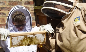He's 85 years old and has been beekeeping for 7 decades—watch what he teaches grandson