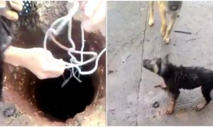 Puppy stuck in a deep hole is saved in milliseconds by man's nifty trick
