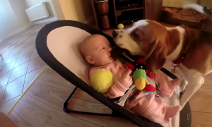 Baby's upset at dog stealing her toy until dog makes up for it tenfold