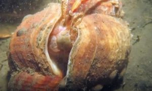 Remarkable footage of hermit crab moving into a new shell is captured