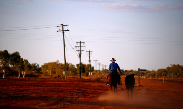 A stockman rides his horse as he leads another down a road towards the cattle yards in the outback town of Windorah, Queensland, Australia, August 11, 2017. (Reuters/David Gray/File Photo)
