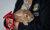Abandoned Rabbit Causes Bomb Scare at Adelaide Airport