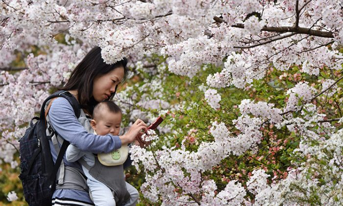 A mother in Tokyo looks at her smartphone while walking with her child, March 29, 2015. (Toru Yamanaka/AFP/Getty Images)