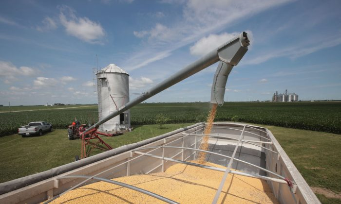 Farmer John Duffy loads soybeans from his grain bin onto a truck before taking them to a grain elevator on in Dwight, Ill., on June 13. China hit U.S. soybeans with retaliatory tariffs amid rising trade tensions between Washington and Beijing. (Scott Olson/Getty Images)