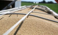 Importers Snap up Cheap US Soybeans as China Stops Buying