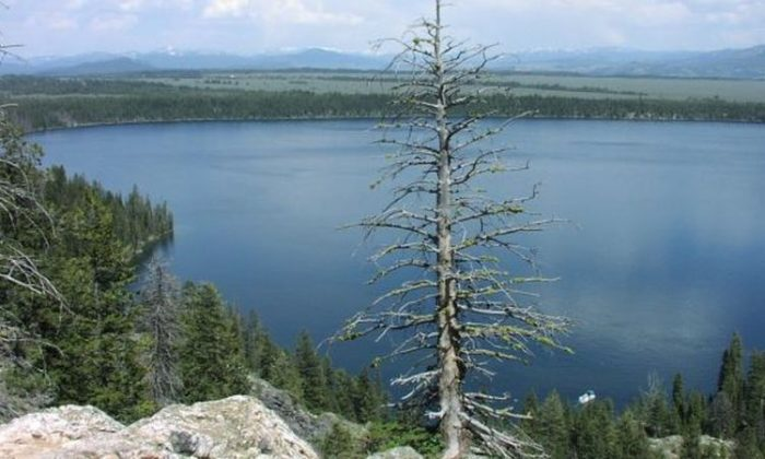 A view of Jenny Lake in Grand Teton National Park. (National Park Service)