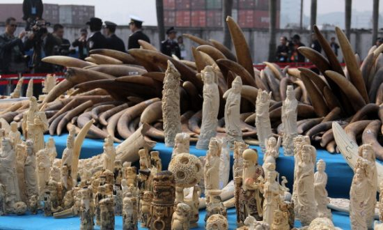 Chinese Customs Officials Seize Millions Worth of Smuggled Animal Parts